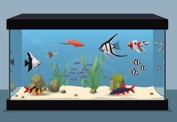Freshwater aquarium illustration