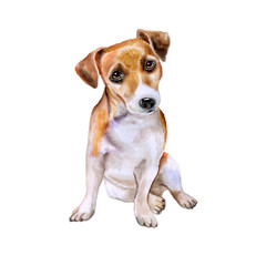 Watercolor portrait of English jack russel terrier breed dog isolated on white background. Hand drawn sweet pet. Bright colors, realistic look. Greeting card design. Clip art. Add your text