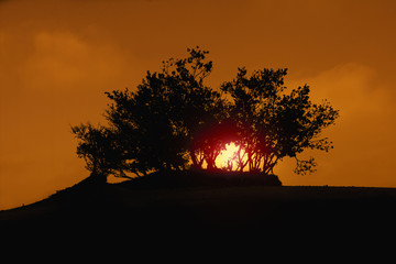 Silhouette of tree in the desert