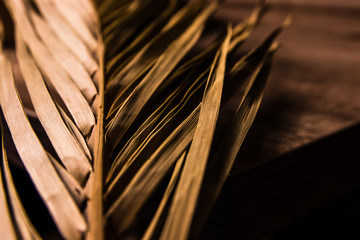 Dry Palm Leaf with High Contrast in warm Earth Tones