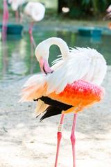 white flamingos at Iguazu Waterfalls