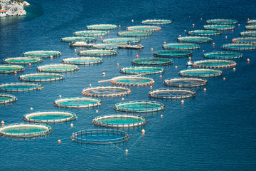 Fish farm in the sea