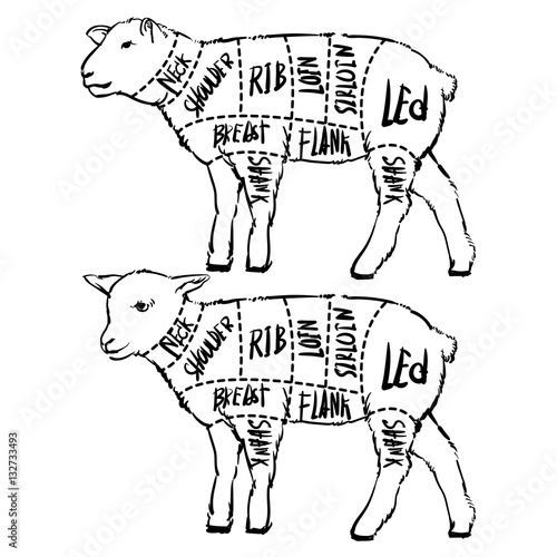 Meat Cuts Diagrams For Butcher Shop Scheme Of Lamb Animal Sil