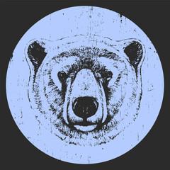 Portrait of Polar Bear. Hand drawn illustration. Vector