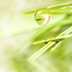 image of fir branches with water drops