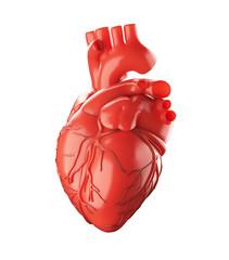 Cuore anatomico rosso con vene e arterie