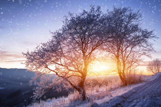 beautiful winter landscape with mountain view. natural backgroun