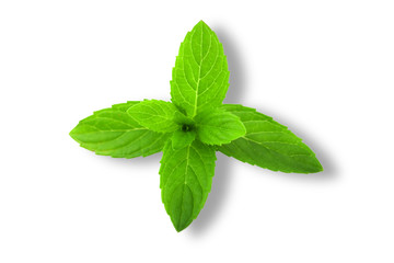 Fresh green mint leaves isolated on white background.
