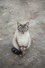 Gatos preciosos libres por el campo
