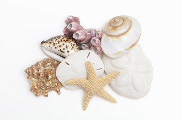 A group of seashells