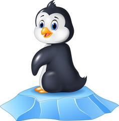 Cute baby penguin sitting on ice floe