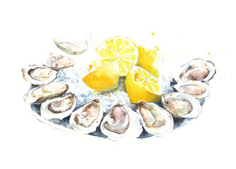 Oysters fresh on a plate watercolor painting illustration isolated on white background