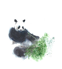 Panda eating bamboo watercolor painting illustration isolated on white background