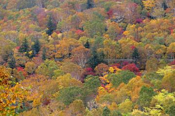 ニセコ山系の紅葉