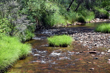 Creek with grass, reeds and rocks in the forest. Sandy Creek at Suggan Buggan in summer.