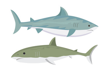 Vector shark character.