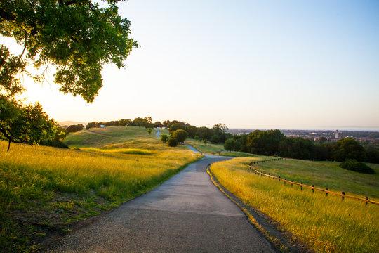 Path Through a Meadow in Stanford Dish Palo Alto California