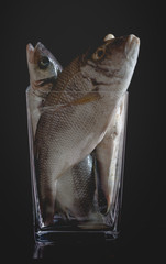 Bream trapped in rising stock prices. Raw fishes in empty vase.
