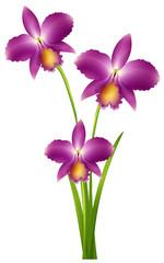 Purple orchid on green stem