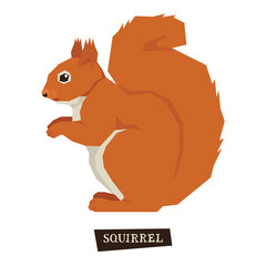 Wild animals collection Squirrel Geometric style
