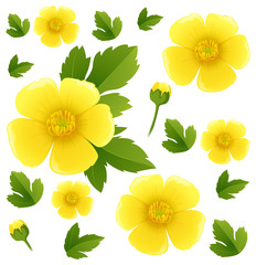 Seamless background with yellow buttercup flowers