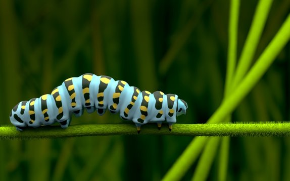 Blue caterpillar alone and lover  3D rendering
