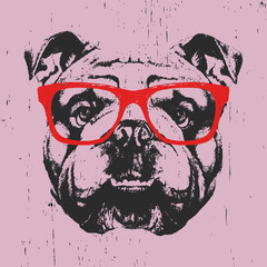 Portrait of English Bulldog with glasses. Hand drawn illustration. Vector.