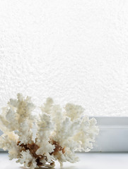 White coral on a background of ice-covered  window