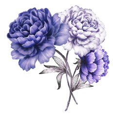 blue peonies. watercolor flowers. floral illustration in Pastel colors. bouquet of flowers isolated on white background. Leaf. Romantic composition for wedding or greeting card.