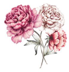 pink peonies. watercolor flowers. floral illustration in Pastel colors. bouquet of flowers isolated on white background. Leaf. Romantic composition for wedding or greeting card.