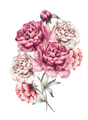 pink peonies. watercolor flowers. floral illustration in Pastel colors. bouquet of flowers isolated on white background. Leaf and buds. Romantic composition for wedding or greeting card.
