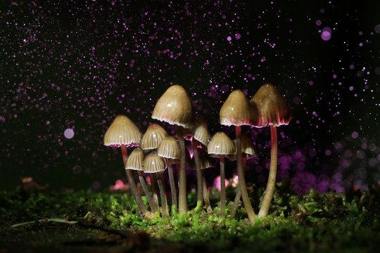 small poisonous mushrooms toadstool group psilocybin