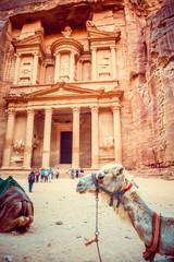 Camel on background of Al Khazneh - treasury, ancient city of Petra, Jordan