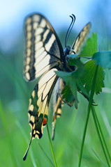 Look at butterfly at eye level of insect.
