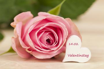 rosa Rose auf einem Holzhintergrund für Valentinstag