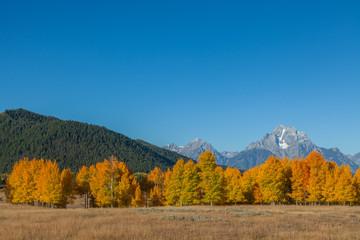 Scenic Fall landscape in Teton National Park