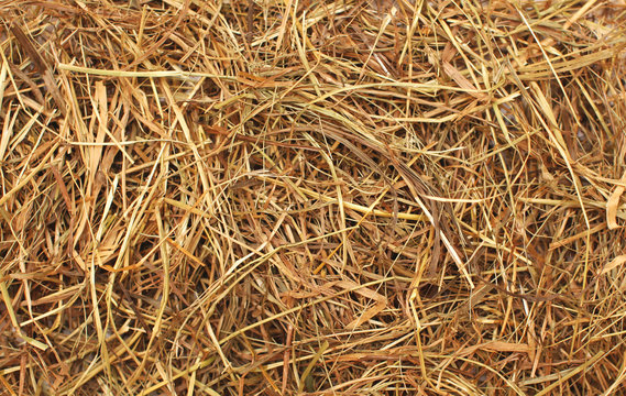 Hay texture closeup abstract background