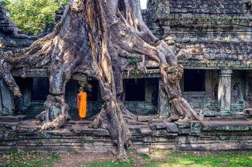 Wall Mural - The monks and trees growing out of Ta Prohm temple, Angkor Wat i