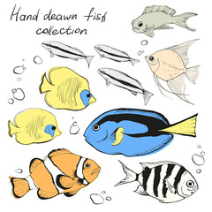 Hand drawn set of different tropical fishes on white background