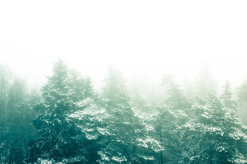 Scenery photo of fog in winter forest. Toned photo