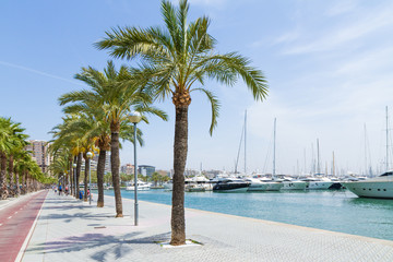 Palma Mallorca Carrer Del Moll marina with palms and yachts