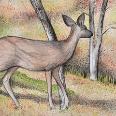 Arizona Deer