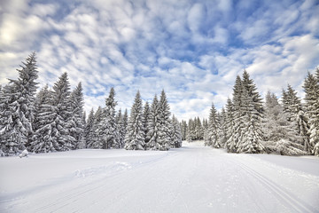 Winter landscape with cross-country skiing tracks and snow covered trees..