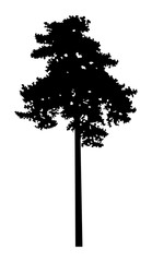 Image silhouette of pine  tree (cedar) . Can be used as poster, badge, emblem, banner, icon, sign, decor...