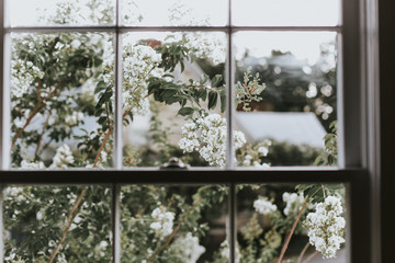 View of white flowers through window