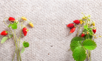 Wild strawberry on a gray background, flat lay