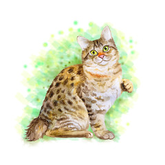 Watercolor portrait of American Bobtail short tail cat isolated on green background. Hand drawn sweet home pet. Bright color, realistic look. Emerald eyes. Greeting card design. Clip art. Add text