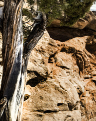tree trunk against sandstone cliff