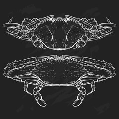 Crab drawing on white background. Hand drawn outline seafood illustration. Crab claw.