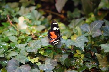 Fotoväggar - Schmetterling